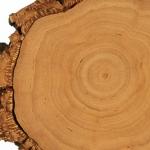 Kaszmeran: jasny akord drzewny