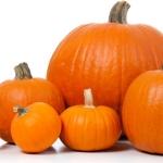 Dynia (Cucurbita) - pochodzenie, wartości odżywcze oraz przepisy