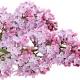 Konkurs na powitanie wiosny - wygraj perfumy!