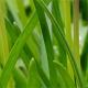 Zielony: ponadczasowy kolor wiosny!