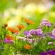 Ogród zapachów