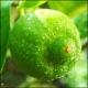 Recenzje perfum niszowych #1: The Different Company Bergamote